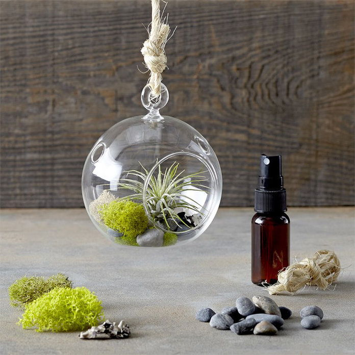 תלויים Air Plant Terrarium Kit